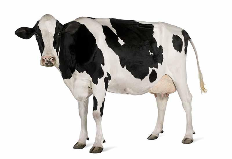 Süt ve Süt ürünlerine alerjisi olanlar whey ve kasein proteinlerini kullanmamalıdır.