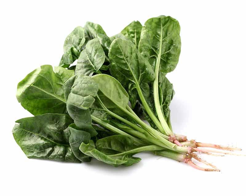 Ispanak, marul, roka gibi sebzeler sandviçinizi daha lezzetli yapar.