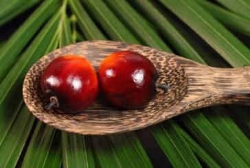 Palmiye Yağı (Palm Yağı) Sağlıklı Mı, Zararlı Mı?
