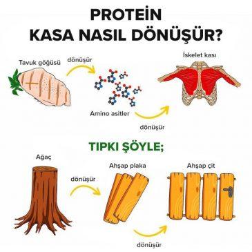 protein-kasa-nasil-donusur
