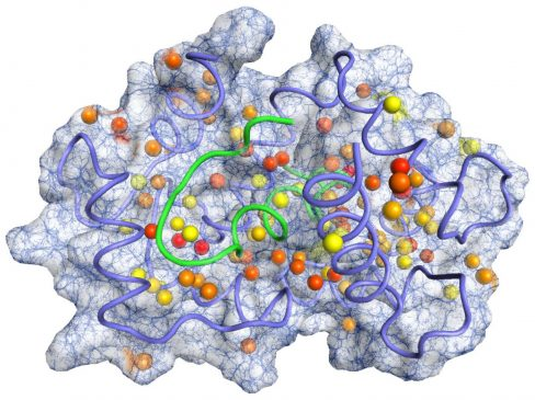 protein-sentezi